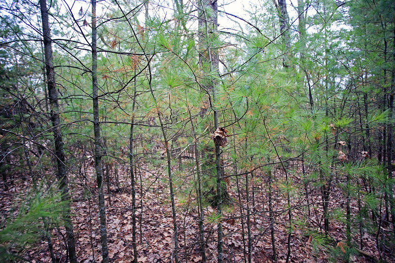 Adams County WI Land for Sale
